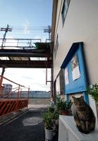 大阪シャッター通りと猫