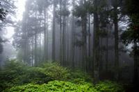 霧がかった森 比叡山