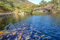 栗林公園 庭園の鯉と偃月橋