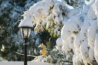 街灯に積もる雪
