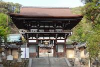 京都 松尾大社 楼門