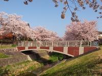 サクラと広峰橋