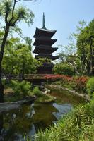 新緑と旧寛永寺五重塔