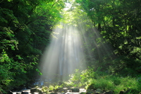 夏の亀田不動滝