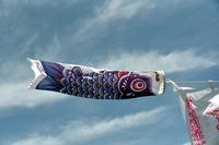 風にそよぐ鯉のぼり