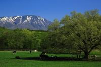 新緑の岩手山