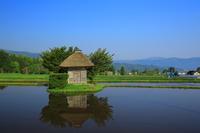 新緑の荒神神社