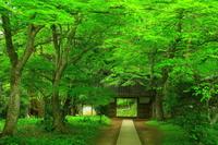 世界遺産 新緑の中尊寺