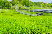 新緑の茶畑と新幹線