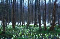 春の刺巻湿原