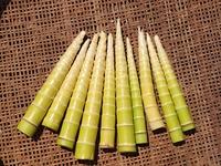 皮をむいたハチクの竹の子