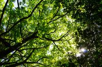 新緑の森の中で