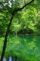 新緑の龍ヶ窪