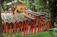 京都 伏見稲荷大社 参道の鳥居
