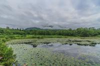 夏のいもり池の風景