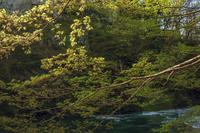 新緑の渓谷風景