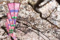日本の春の桜と提灯