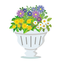 プランターに植えられた花たち(ノースポール,