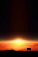 日の出とイノシシのシルエット