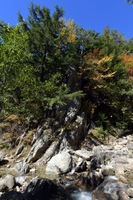初秋の紅葉(瑞垣山)