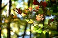 瑞垣山の紅葉