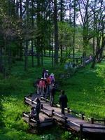 春の白馬村姫川源流の風景