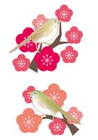 梅とウグイスとメジロ