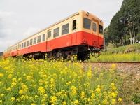 小湊鉄道 ローカル線
