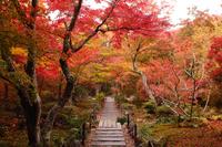 京都 宝筐院の紅葉