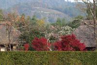 京都 秋の落柿舎
