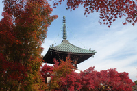 京都 清凉寺 多宝塔の紅葉