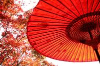 赤い傘 紅葉