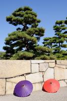 庭園 和傘