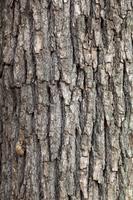 樹皮 背景