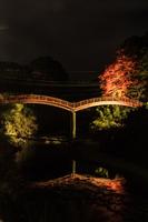 秋のライトアップされた観音橋の風景