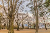 春の沼田城址の風景