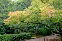 岡山後楽園 庭園風景
