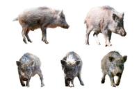 切り抜き用 5頭の日本イノシシの子供 年賀、干支、新年イメージ