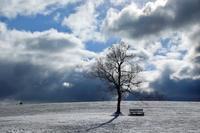 冬の公園風景