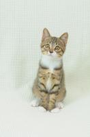 お座りする子猫