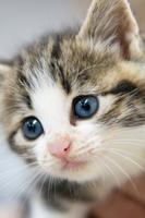 子猫の青い目
