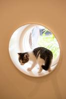 窓に乗る子猫