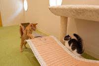おもちゃで遊ぶ子猫たち