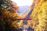 Futami Suspension Bridge stained in late autumn