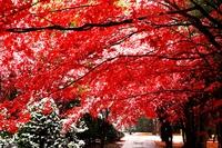 Hiraoka Daido Center dyed in late autumn