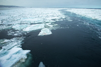 Drift ice of the World Natural Heritage