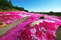 Niseko's Mt. Yotei and moss grass