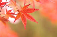 Luminous sparkle in late autumn