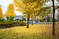 高道西公園 紅葉