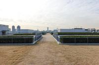 豊洲市場 屋上緑化広場
